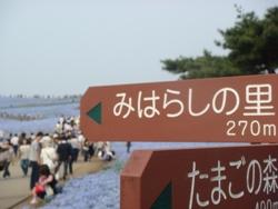コピー ~ DSC06482.JPG